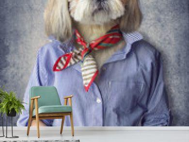 Cute dog shih tzu portrait, wearing human clothes, on vintage background. Hipster dog