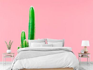 Green cactus minimal stillife style against pastel pink background.