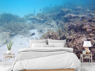 Sad view of dead but still gorgeous coral reefs. Indian Ocean. Maldives. Underwater world.
