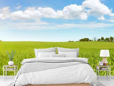 Wiese im Sommer - Feld mit Gras Panorama