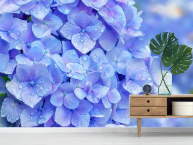 雨上がりの紫陽花 Hydrangea