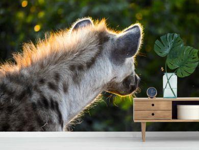 Sun on hyena mane