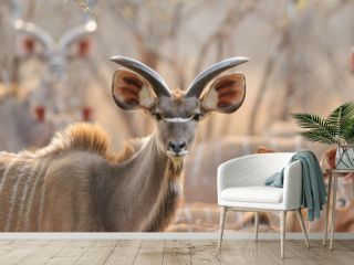 Kudu in sunset - Southern Africa