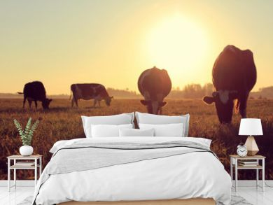 landscape with cows/ silhouettes of dairy pair-hoofed animals in a meadow with lush grass against the backdrop of the dawn of a sun