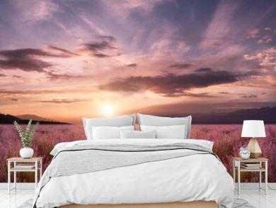 panorama field lavender