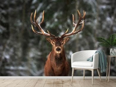 Noble deer male in winter snow forest.