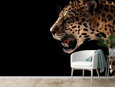 cheetah, leopard, jaguar