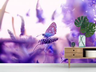 little butterfly pigeon sitting in a summer meadow surrounded by flowers in lilac tones