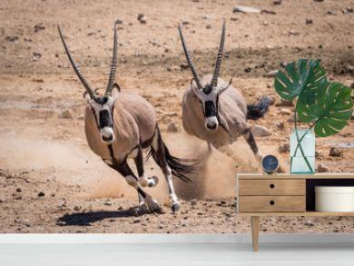 Two Oryx running in the Namib desert