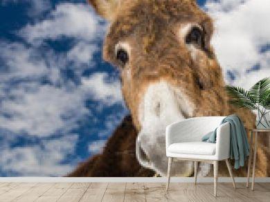 Cute fluffy donkey eating grass