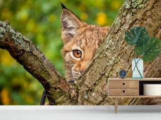 young lynx behind a tree
