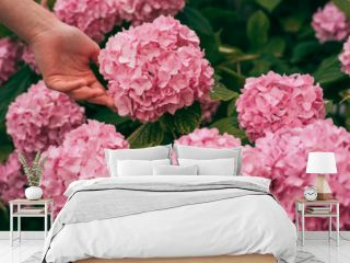 woman care of flowers in garden. gardener with flowers. hydrangea. Spring and summer. Flower care and watering. soils and fertilizers. Greenhouse flowers. skincare and health. Nice flowers