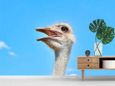 Portrait of an ostrich against the blue sky close up
