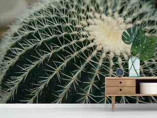 cactus texture background, close up