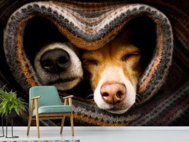 dogs under blanket together