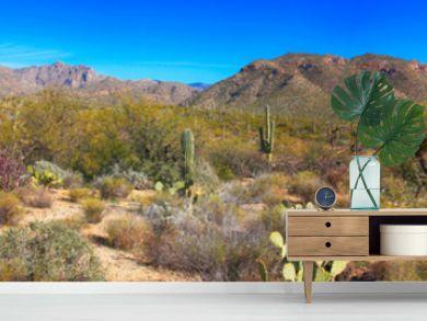Sabino Canyon in Tucson, Arizona