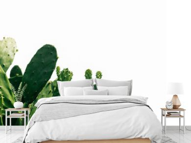 green cactus on white background
