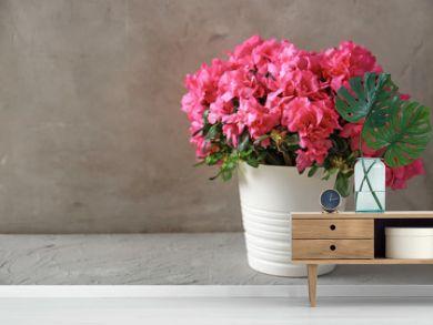 Pot with beautiful blooming azalea on table