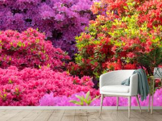 Colorful azalea flowers background 色とりどりのツツジの花 背景