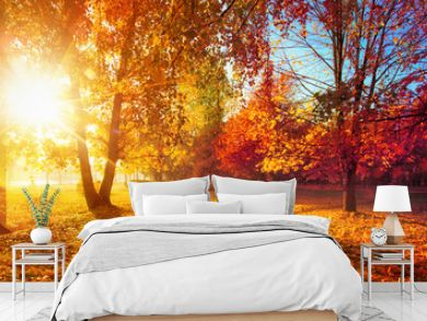 Autumn Landscape. Fall Scene.Trees and Leaves in Sunlight Rays