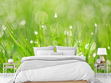 Green grass abstract background. beautiful juicy young grass in sunlight rays. green leaf macro. Bright fresh Summer or spring nature background. long banner.  copy space