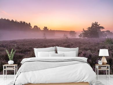 Landscape photo from the heather, here is an atmospheric Sunrise on the Teut in Limburg, Belgium