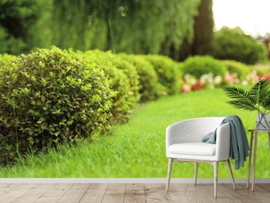 Picturesque landscape with beautiful green lawn on sunny day. Gardening idea