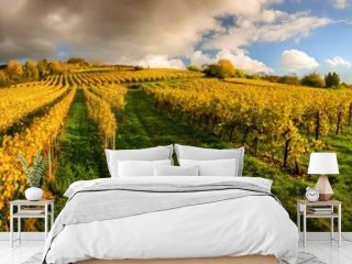 Panoramic vineyard landscape before sunset