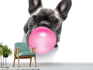 dog chewing bubble gum