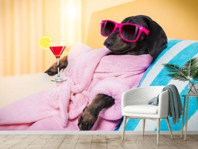 dog spa wellness salon