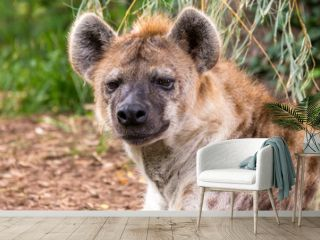 close up portrait of a hyena