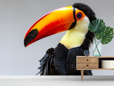 isolated portrait of a toucan bird striking a pose