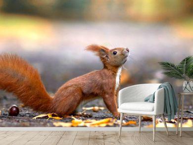 lustiges Eichhörnchen im Park