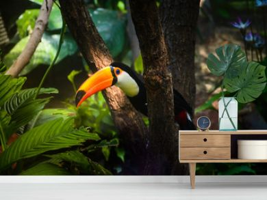 Colorful toucan bird of the amazonian forest