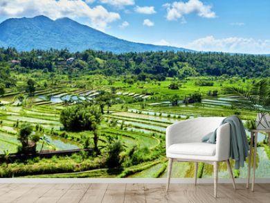 Bali Candidasa Rice Terraces field Indonesia panorama