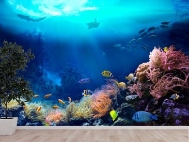 Underwater view of the coral reef. Ecosystem. Life in tropical waters.