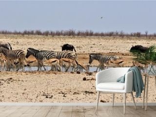 Many animals at waterhole in Etosha Nationalpark. Springboks, zebras, oryx antelopes,