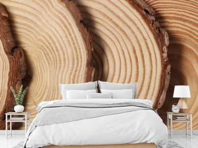 Cross section of tree trunk, stump, background and texture