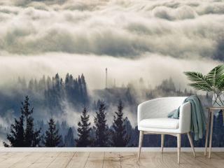 The fog envelops the forest