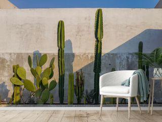 Cactus against a concrete wall Mexico City