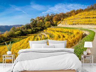 Panorama of a vinyard with terraces and Wachau valley near Dürnstein, Austria