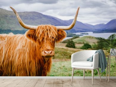 Highland Cattle with scenic background