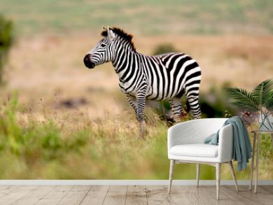 Zebra on the plains in Tanzania, Africa