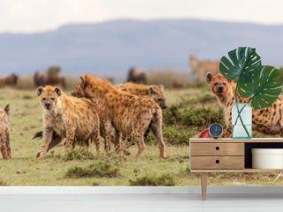 Manada de hienas devorando a sus presas