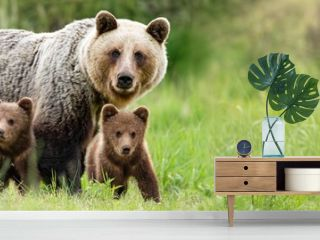 Brown bear, ursus arctos, mother with two cubs on green meadow with copy space. Wide panoramic banner of wild mammal with her lovely offsprings. Animal wildlife in summer nature.