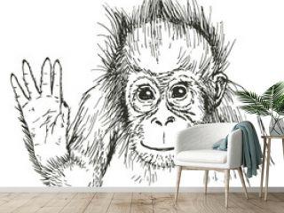 Hand drawn sketch of orangutan. Vector illustration