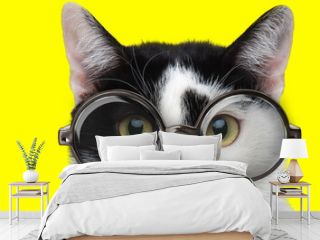cute domestic cat wearing glasses