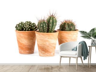Three cactus plants in terra cotta flower pots isolated on white background