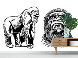 Graphical set of gorillas isolated on white background, vector illustration, african animal