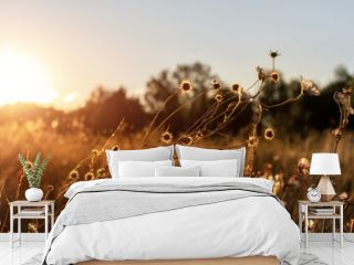 Abstract warm landscape of dry wildflower and grass meadow on warm golden hour sunset or sunrise time. Tranquil autumn fall nature field background. Soft golden hour sunlight panoramic countryside